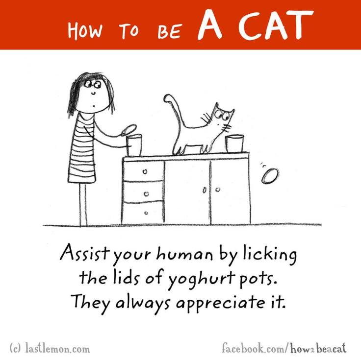 How to be a cat 6