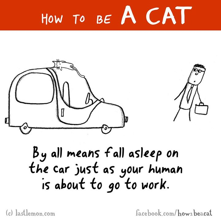 How to be a cat 7