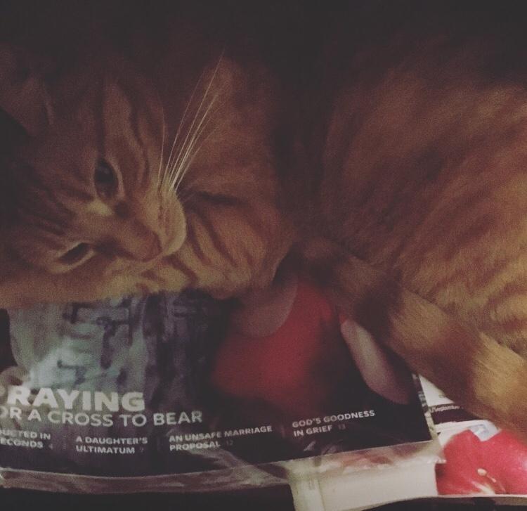 Milo relaxing